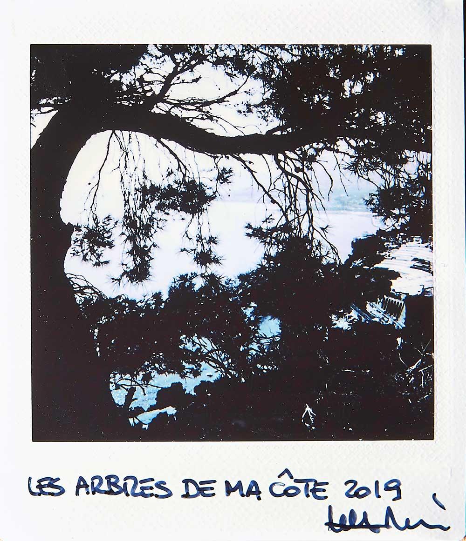 Les arbres de ma côte