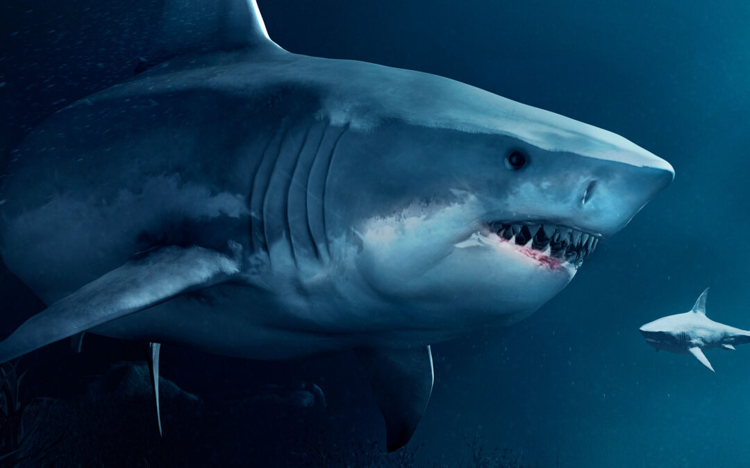 Sharks! 3d Cgi project