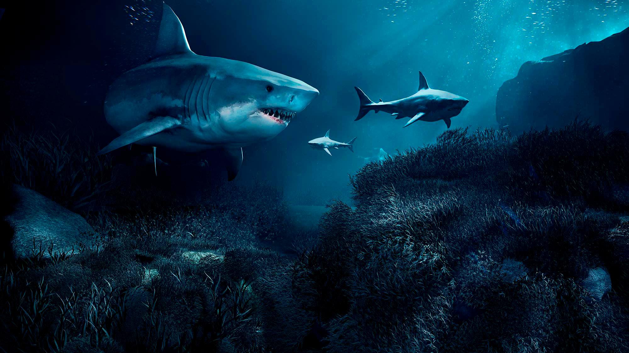 sharks Luzzitelli Danieli productions SHARKS! 3d cgi project