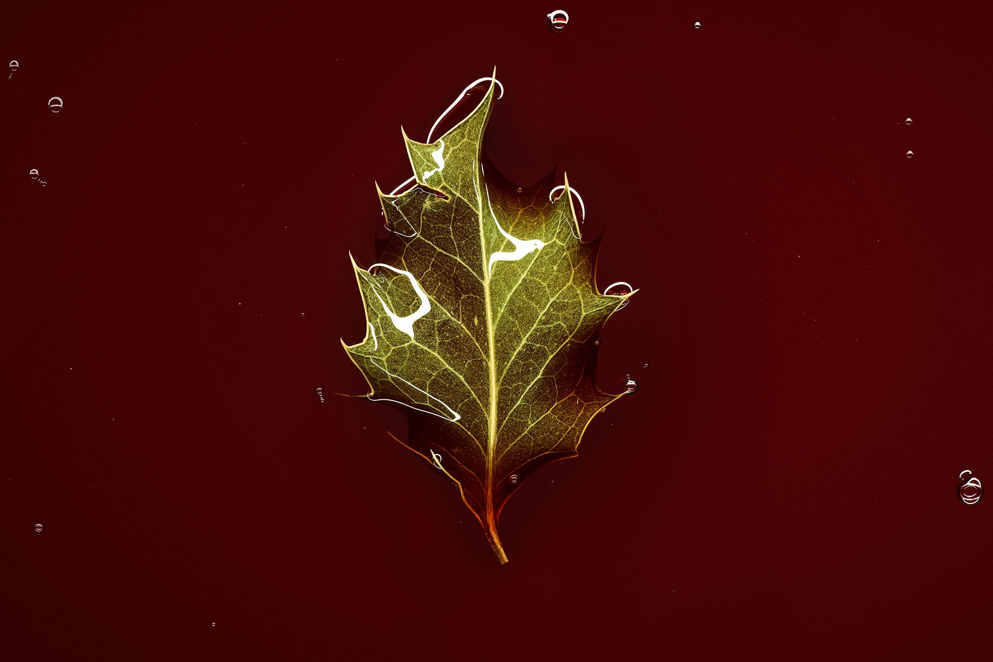 Les feuilles mortes photo by Luzzitelli Danieli Productions
